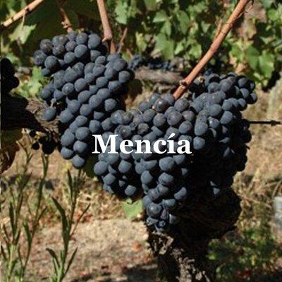 Mencia Grape