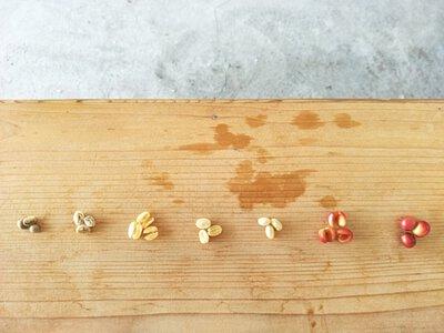 木紋桌上,排列著咖啡果實到烘焙前的處理過程,歡迎更進一步了解處理程序
