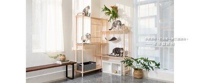 四隻貓咪在跳台上玩耍