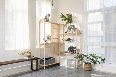 四肢貓咪在貓跳台上玩耍