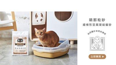 橘貓與貓砂