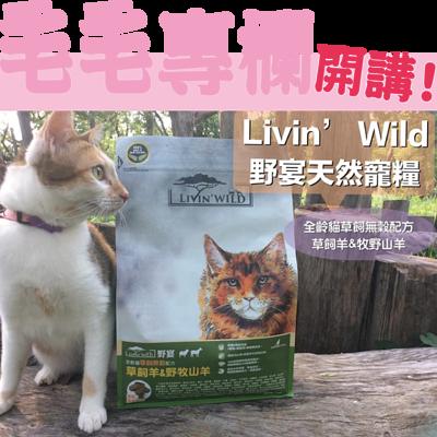 野宴貓飼料推薦