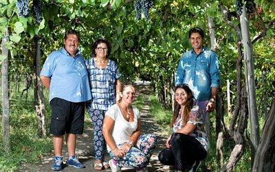 Sorrentino Vesuvio,索倫蒂諾維蘇威酒莊,有機酒莊,火山酒,單一葡萄園,Don Paolo,Aglianico,艾格尼科,Campania,坎帕尼亞產區,Campania紅酒,Wine Time,酒在當下