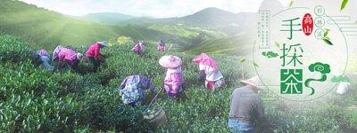 杉林溪手採茶