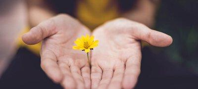 一雙手捧著一朵花色小花