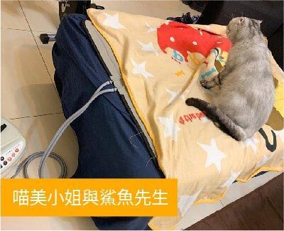 溫博士WiPOS水暖機W99 2.0:喵美小姐與鯊魚先生-口碑開箱