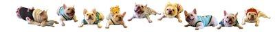 寵物冰絲涼蓆,寵物冷凝墊,寵物消暑用品,寵物涼爽用品,寵物涼感,寵物涼墊,寵物散熱墊,寵物散熱鋁墊