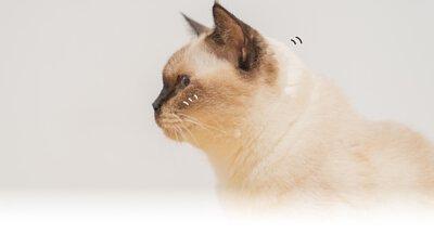 慢性缺水是  貓咪健康最大的敵人.寵物鮮食,貓鮮食,貓腎臟病,貓咪主食罐推薦,濕食