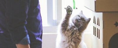 我的貓咪,  14歲才轉全鮮食.寵物鮮食,貓鮮食,貓腎臟病,貓咪主食罐推薦,濕食