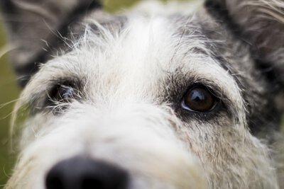 防止眼睛老化,狗,貓,白內障,看不見,抗氧化