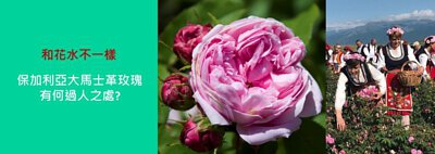 玫瑰純露, 保加利亞大馬士革玫瑰,玫瑰花水,