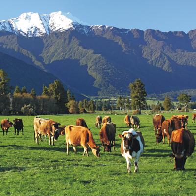 原物料介紹 紐西蘭德紐乳品