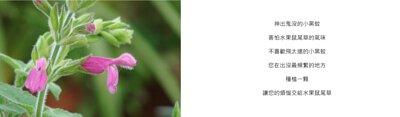 神出鬼沒的小黑蚊  害怕水果鼠尾草的氣味  不喜歡飛太遠的小黑蚊  您在出沒最頻繁的地方  種植一顆  讓您的煩惱交給水果鼠尾草