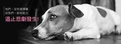 流浪狗牠們沒有選擇權,但我們都有能力遏止悲劇發生