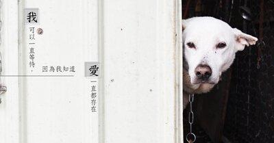 流浪狗可以一直等待,因為牠知道愛一直都存在