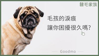 【歸毛家族GoodMo】寵物的沐浴養護,潔淨美學