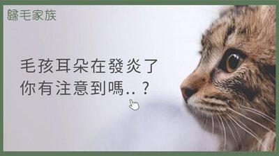 【歸毛家族GoodMo】寵物萌耳保衛,耳道護理