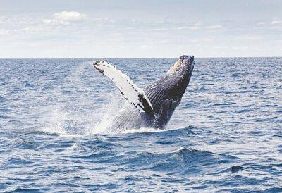 紐西蘭鯨魚品酒藝術6日