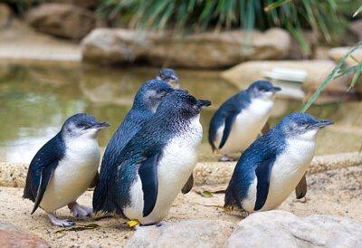 紐西蘭自然生態企鵝遊道4日