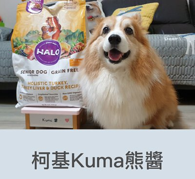 柯基kuma熊醬推薦