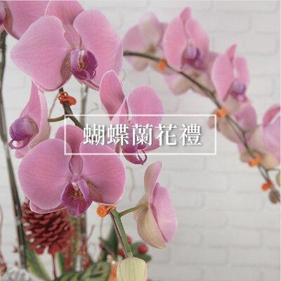 蝴蝶蘭盆栽