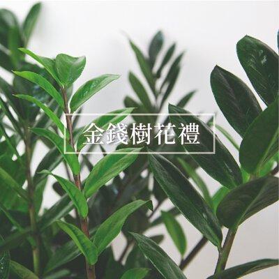 金錢樹盆栽
