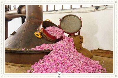 FACESCHOOL,精油大學,精油百科,精油,大馬士革玫瑰,奧圖玫瑰,玫瑰精油