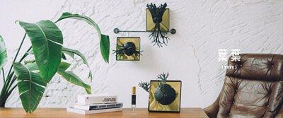香氛鹿角蕨搭配北歐風格空間