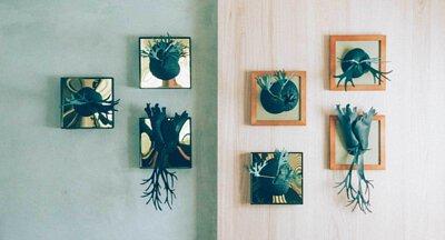 多個香氛鹿角蕨掛於牆上