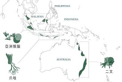 三種鹿角蕨品種分佈圖