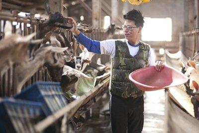 每個清晨,當人們還在夢鄉睡得正甜,例行擠奶工作已為牧場忙碌的一天揭開序幕