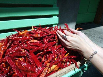 我捧起一把曬乾的辣椒並感受陽光所帶來的溫度