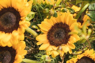 Spread Wings 太陽與蕨鮮花系列