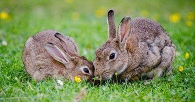 為什麼我們應該拒絕動物實驗?