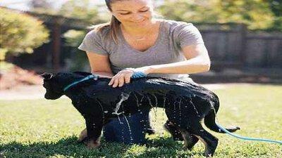 穿戴式寵物沐浴工具,寵物沐浴工具,穿戴式,單手寵物洗澡,寵物洗澡,Aquapaw