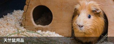 穴兔寵物酒店,moonrabbithotel,兔仔用品,兔糧,龍貓用品,龍貓糧,倉鼠用品,倉鼠糧,天竺鼠用品,天竺鼠糧,寵物用品,提摩西牧草,oxbow,momi,Timothyhay,rabbit,hamster,chinchilla,寵物食品