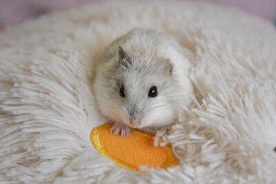 穴兔寵物酒店,moonrabbithotel,倉鼠,hamster