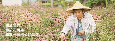 花賜康,紫錐花,過敏,兒童,保健食品
