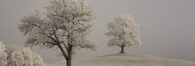 冬季憂鬱精油