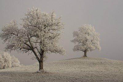 冬季憂鬱精油季節情緒失調