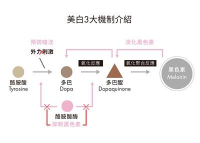 美白3大機制─抑制、淡化黑色素和預防暗沉