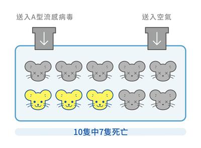 老鼠A型流感中,這一箱送入A型流感病毒及空氣,結果10隻老鼠中7隻死亡