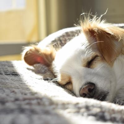 每日有足夠睡眠,抵抗力自然會提升, 輕輕鬆鬆便可以有更好的免疫力。