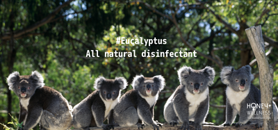 Eucalyptus is a natural disinfectant and is scientifically proven to be highly antibacterial while keeping safe and harmless