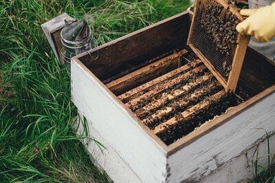 蜂膠成份中的黃酮類(flavonoids)及咖啡酸(caffeic acid)化合物,科研證實蜂膠具有調節免疫力的作用。蜂膠