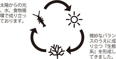 MOANA 生態球 生態循環系統 免運費