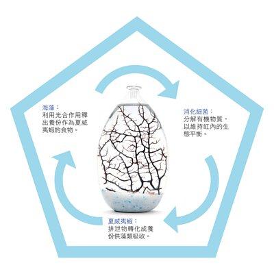 MOANA 生態球 生態循環系統 免運費 售後服務