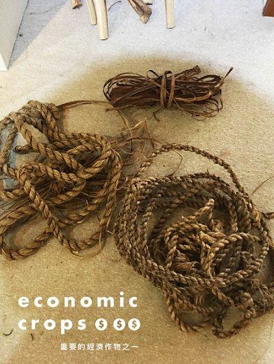 成熟的黃麻在採收時,只取用強韌的植物纖維部分,葉子多會丟掉,也因丟掉可惜,才將葉子取下食用,成為台中特有的麻薏。