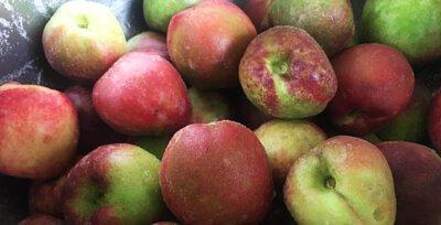 開始醃製三月桃