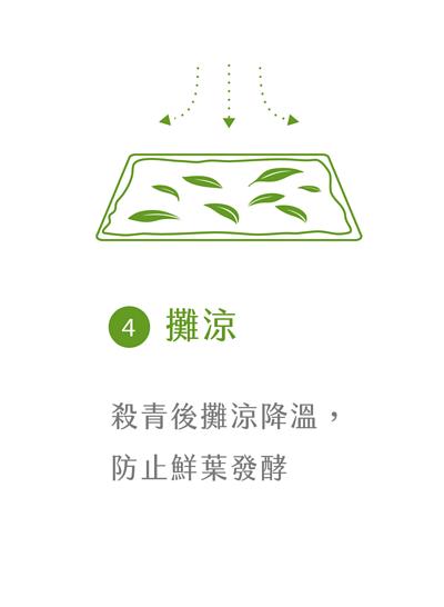 晁鎮茶苑古樹茶雨林製作流程攤涼